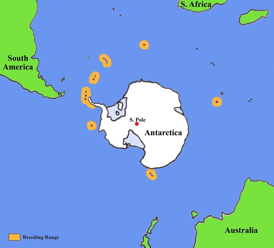 Penguin habitat map - photo#32