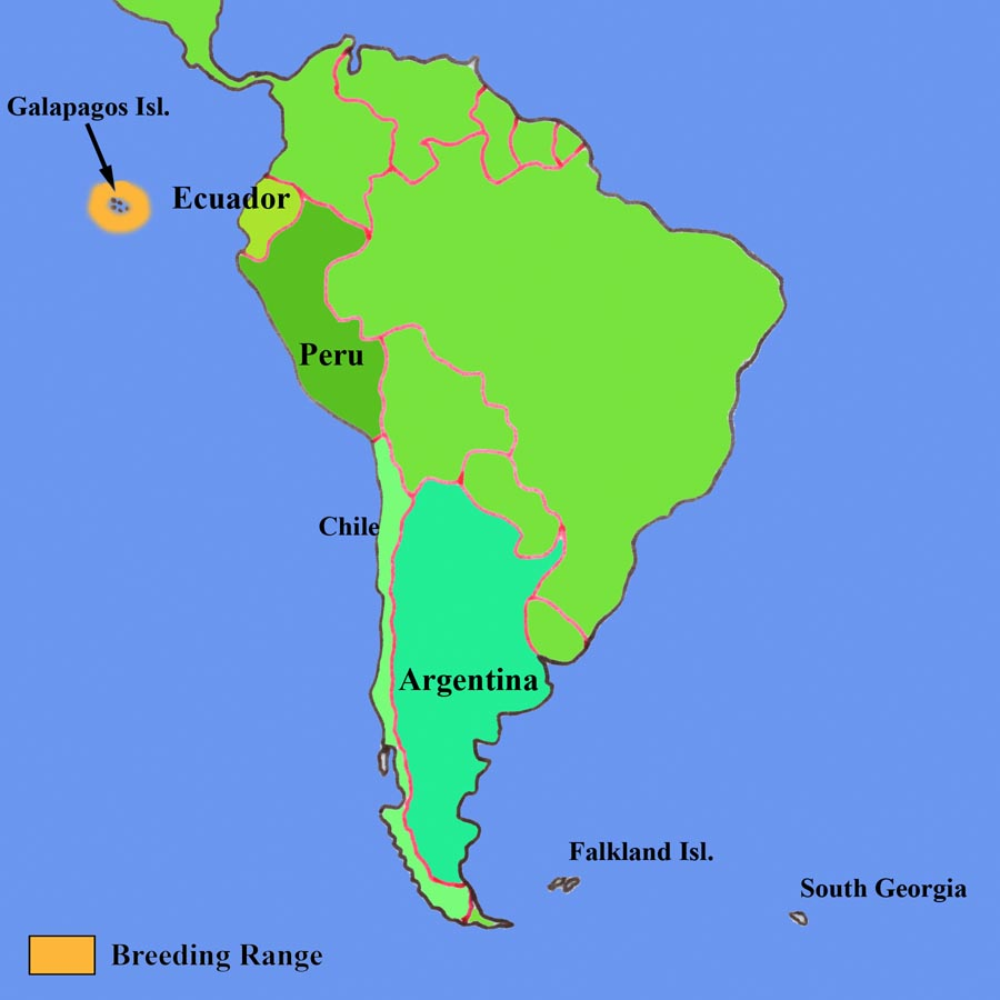 Galapagos Penguins - Map where is the galapagos islands relative to the us