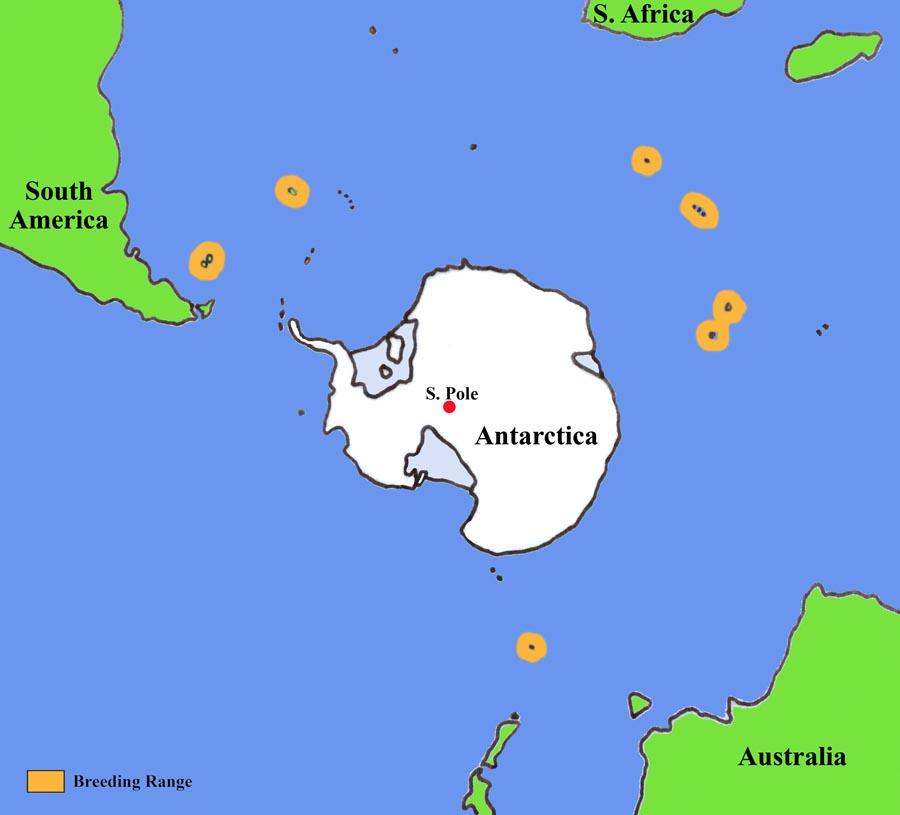 Penguin habitat map - photo#5
