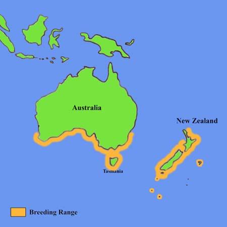 Penguin habitat map - photo#38